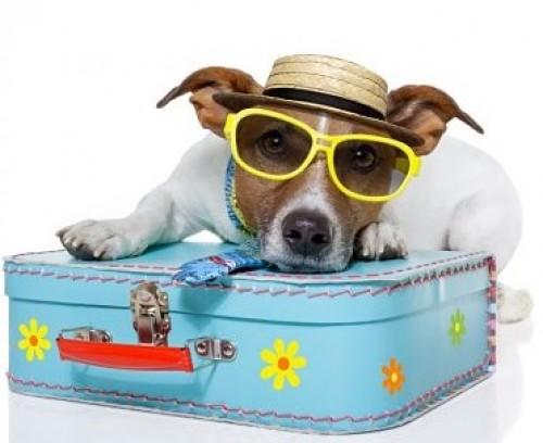 O que é preciso em termos legais para viajar com o seu animal?!