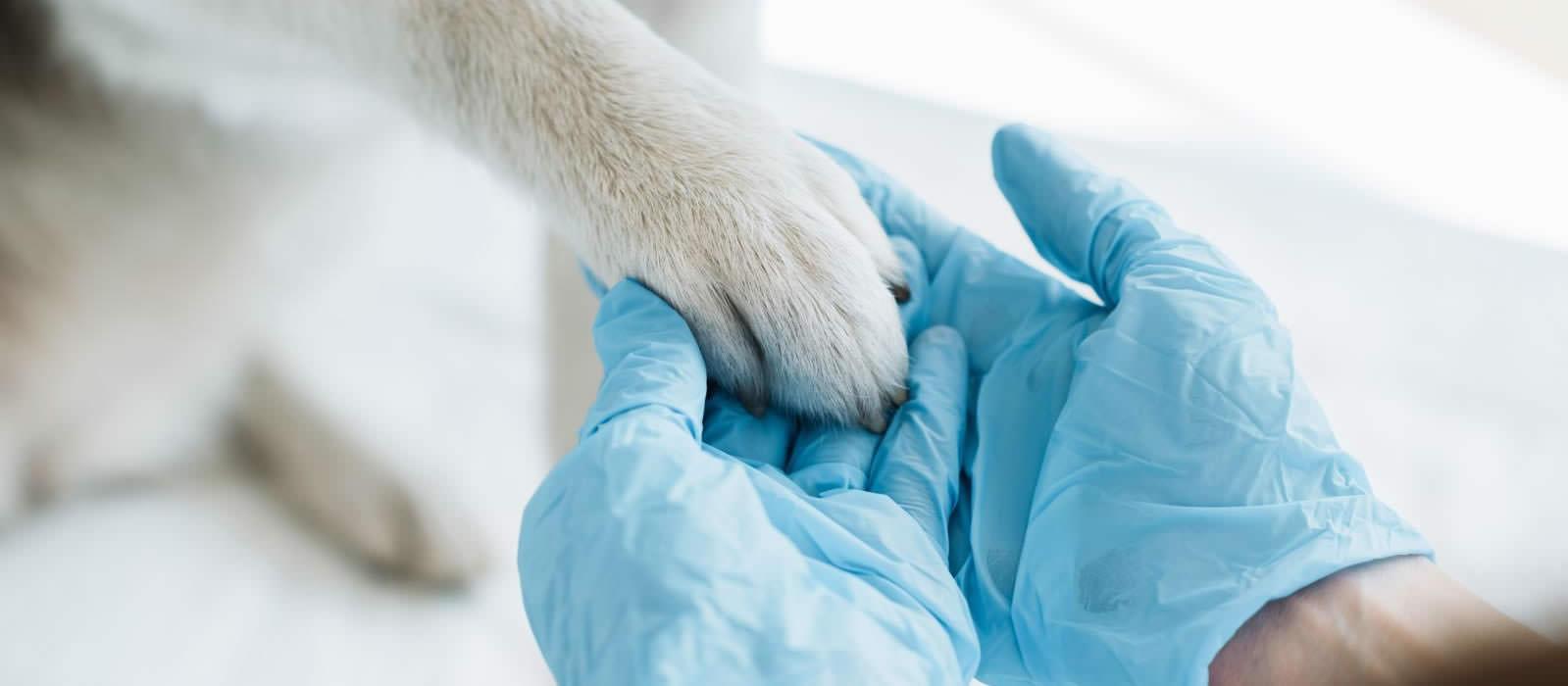 cão com pata na mão de uma pessoa